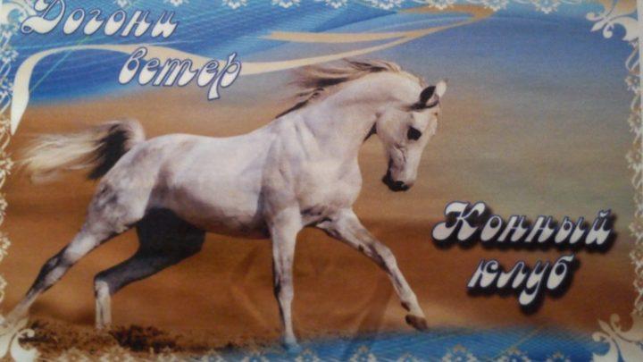 Конный клуб «Догони ветер»